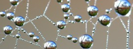 "David Kleinert - ""Nature's Jewels"""