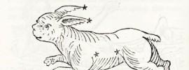 rabbit stars