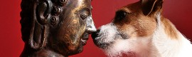Dog Meets Buddha, by Laura Styrman