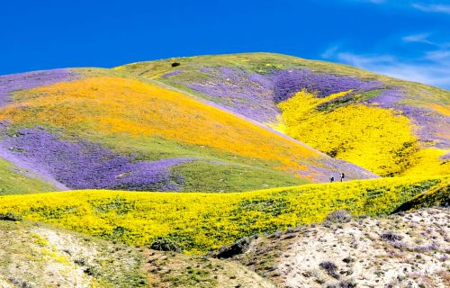 superbloom on the carizzo plain