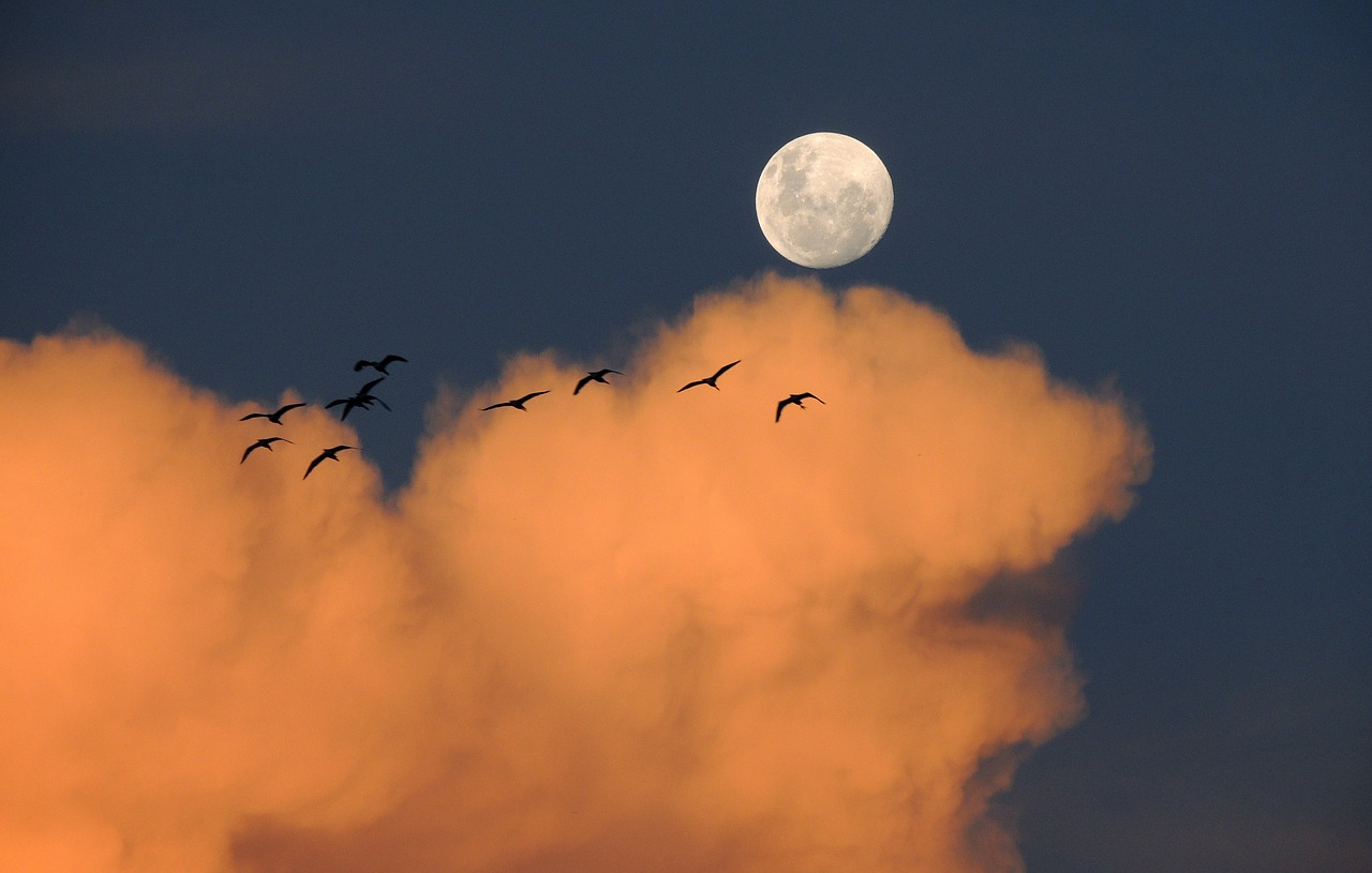 moon in red clouds with a flock of birds