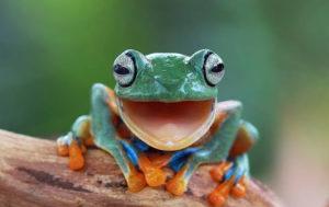 Frog - I support transformation